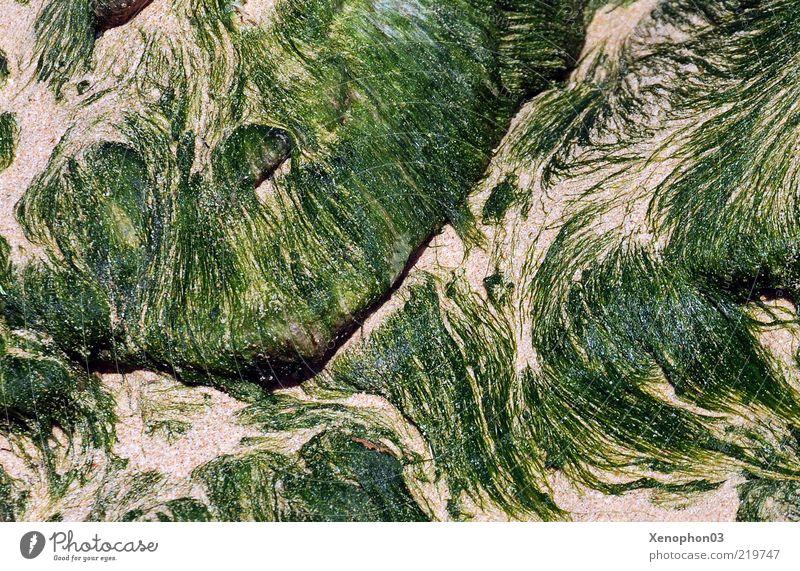 Algenfäden am Strand Natur Pflanze Sand Wasser Grünpflanze Tangfäden Wandel & Veränderung fließen filigran Farbfoto Nahaufnahme Detailaufnahme Muster