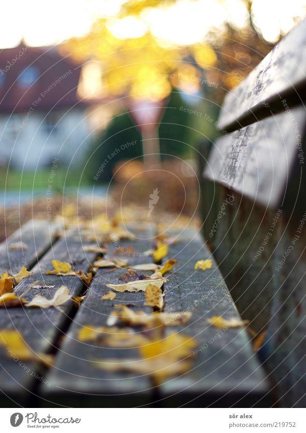Bank im Dorf Natur Herbst Blatt Herbstlaub Haus Parkbank Holz Erholung gelb ruhig Idylle herbstlich sentimental Oktober Ruhestand Älterwerden alt Außenaufnahme