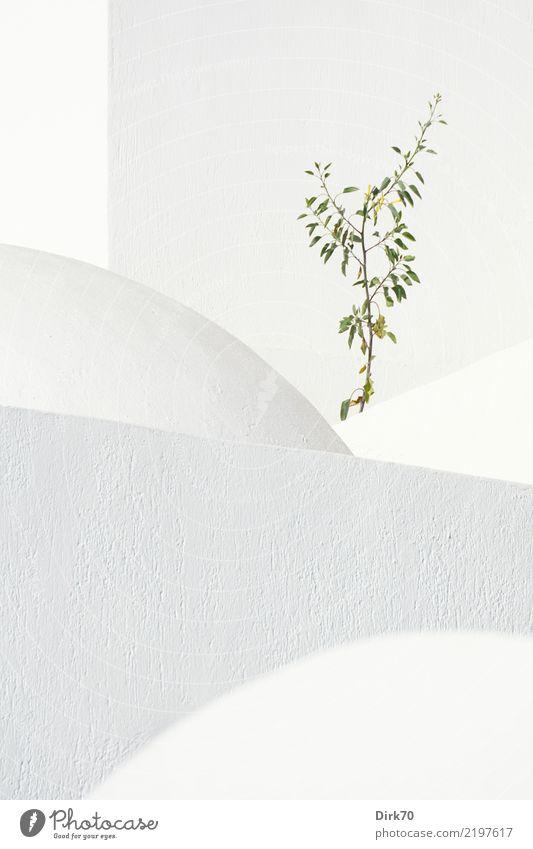 Gebrochene Geometrie Natur Ferien & Urlaub & Reisen Pflanze weiß Baum Leben Wand natürlich Mauer Tourismus Fassade Wachstum Kirche ästhetisch Sträucher