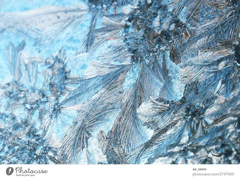 Eiskristalle Natur blau Weihnachten & Advent Farbe Wasser weiß Winter Umwelt kalt grau Wetter glänzend ästhetisch Spitze Klima