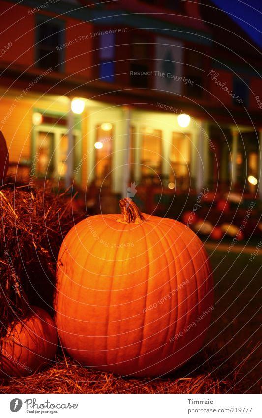 Helloween Gebäude Feste & Feiern Dekoration & Verzierung Halloween Kürbis Erntedankfest Kürbiszeit