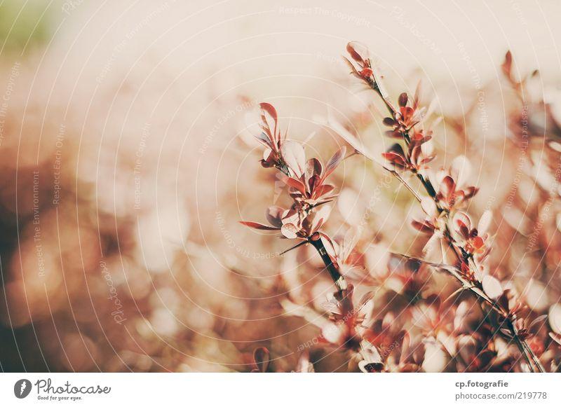 Busch Natur Pflanze Sommer Herbst Schönes Wetter Sträucher Blatt Wärme Farbfoto Tag Licht Sonnenlicht Schwache Tiefenschärfe Menschenleer Textfreiraum links
