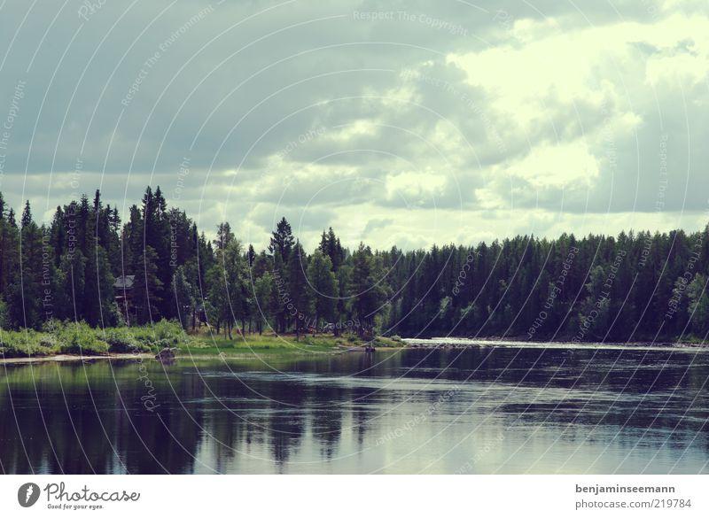 Vindelälven - Schweden Ferien & Urlaub & Reisen Freiheit Fluss Flussufer Wald Nadelbaum Umwelt Natur Landschaft Wasser Sommer Schönes Wetter Baum ruhig