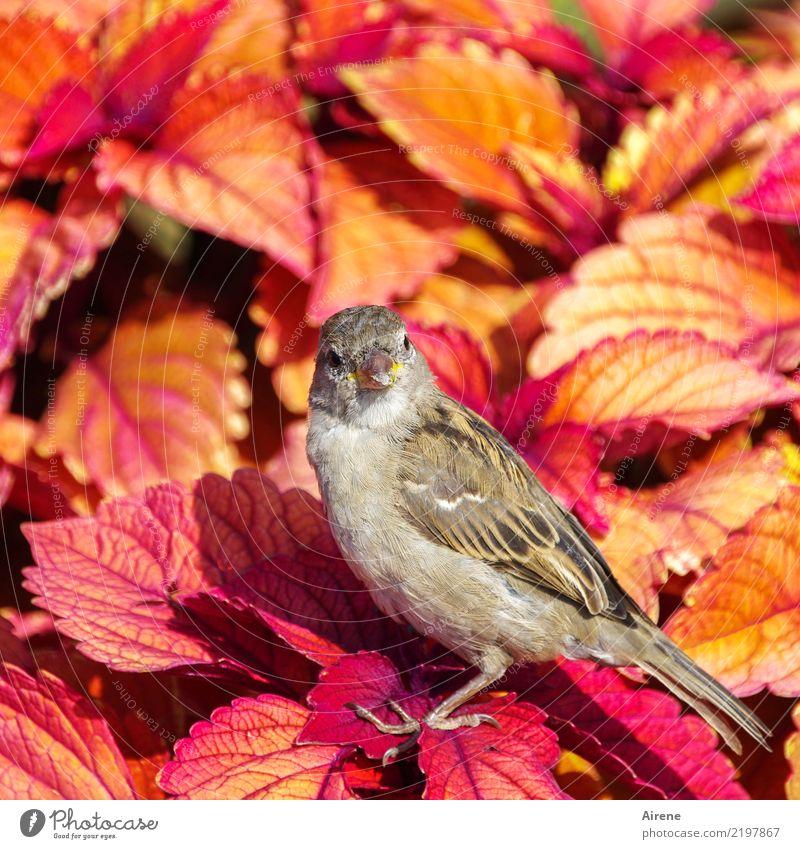 is' was?! Blatt exotisch Zierpflanze Tier Vogel Spatz 1 frech frei Freundlichkeit schön klein natürlich niedlich gelb orange rosa rot Vertrauen zutraulich