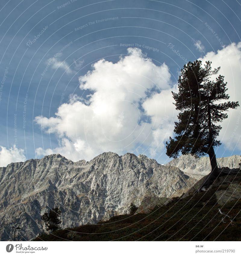 .... ................... | Antholz [17] Baum Alpen Berge u. Gebirge Antholzer Tal Südtirol Staller Sattel blau grau schwarz Fernweh Ferien & Urlaub & Reisen