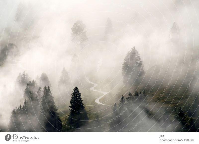 Nebelstimmung im Kiental Baum Landschaft Erholung Wolken ruhig Wald Berge u. Gebirge Straße Herbst Traurigkeit Freiheit wandern Wetter Luft Wassertropfen