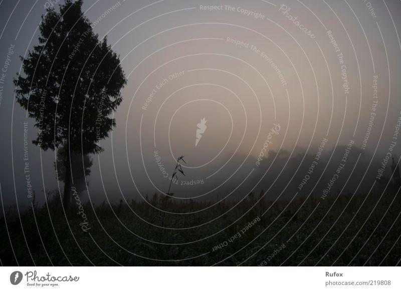 Verschwinden im Nebel - Der Morgen Berge u. Gebirge Umwelt Landschaft Himmel Herbst schlechtes Wetter Baum Hügel Rauch bedrohlich dunkel gruselig Stimmung