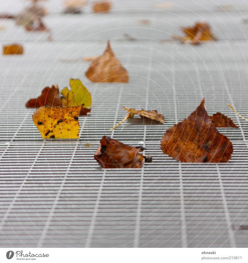 Laub Natur Blatt Herbst braun Metall Umwelt liegen fallen Vergänglichkeit Verfall Gitter Herbstlaub herbstlich Herbstfärbung Herbstwind Gitterrost