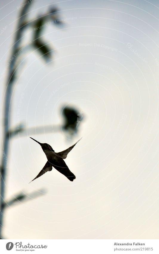 Hummingbird Natur Tier Vogel klein Umwelt fliegen Flügel Schweben Zweig Schnabel flattern Kolibris Vogelflug