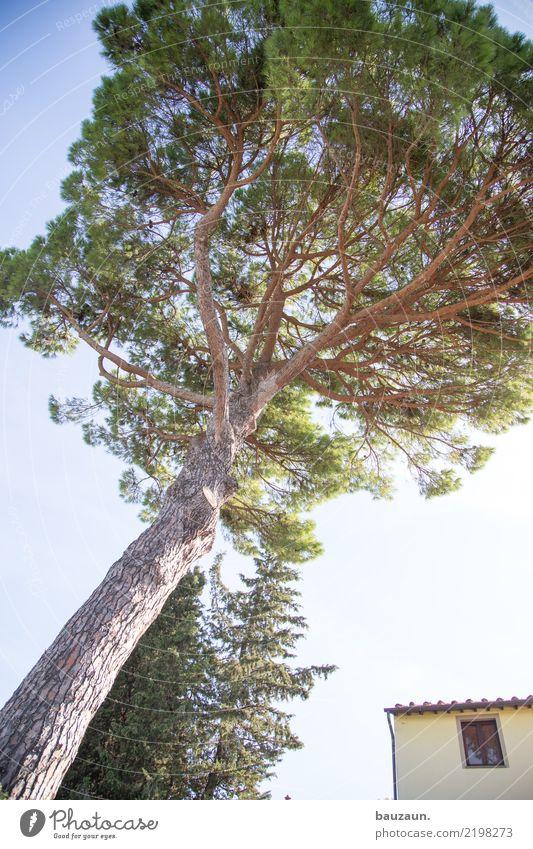 oh tannenbaum. Ferien & Urlaub & Reisen Tourismus Freiheit Häusliches Leben Wohnung Haus Garten Umwelt Natur Landschaft Himmel Klima Schönes Wetter Pflanze Baum