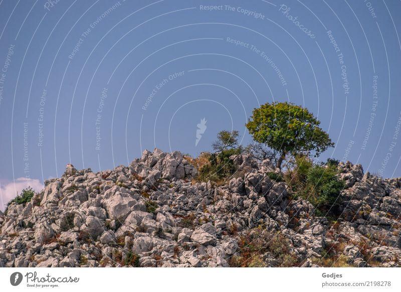 standhaft ... der Baum Natur Ferien & Urlaub & Reisen Pflanze blau Sommer grün weiß Landschaft Einsamkeit Berge u. Gebirge Wärme grau braun Felsen Erde
