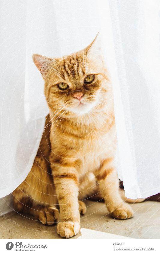 Eff off! Häusliches Leben Tier Haustier Katze Tiergesicht Fell Pfote 1 Blick sitzen warten authentisch Coolness niedlich rebellisch schön orange weiß