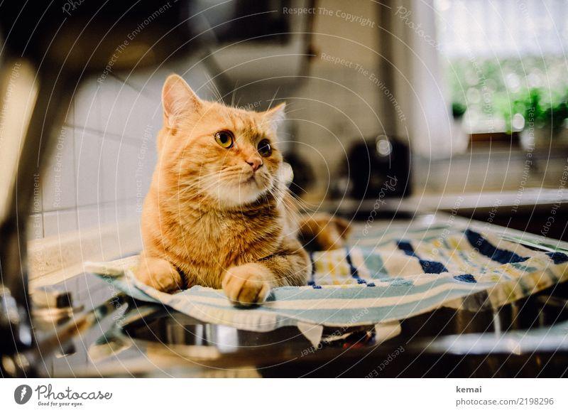 Küchenhilfe Katze Erholung Tier ruhig Lifestyle Wärme lustig außergewöhnlich Zusammensein Freundschaft Häusliches Leben Wohnung Zufriedenheit liegen
