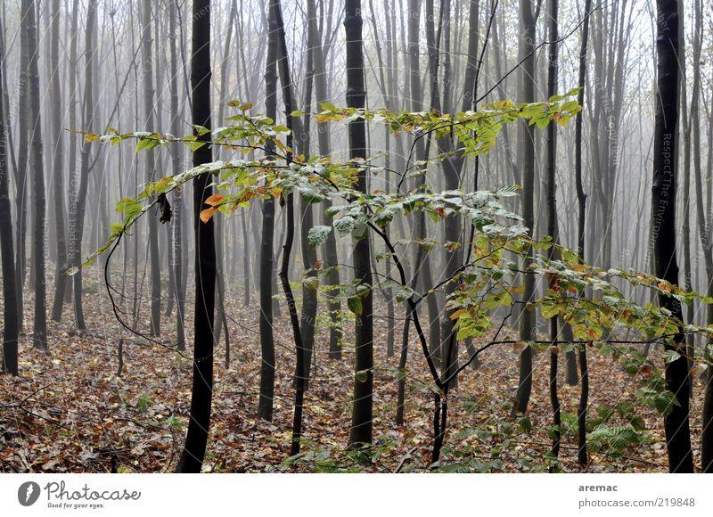 Graue Nebel wallen Natur Baum Pflanze ruhig Blatt Wald dunkel Herbst Regen Landschaft Umwelt Sträucher viele Baumstamm kahl