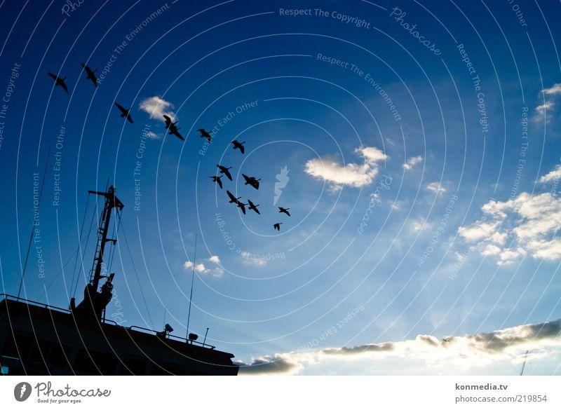 Gemeinsam der Sonne entgegen Umwelt Natur Luft Himmel Wolken Horizont Sonnenaufgang Sonnenuntergang Sommer Themse Schifffahrt Containerschiff Tier Wildtier
