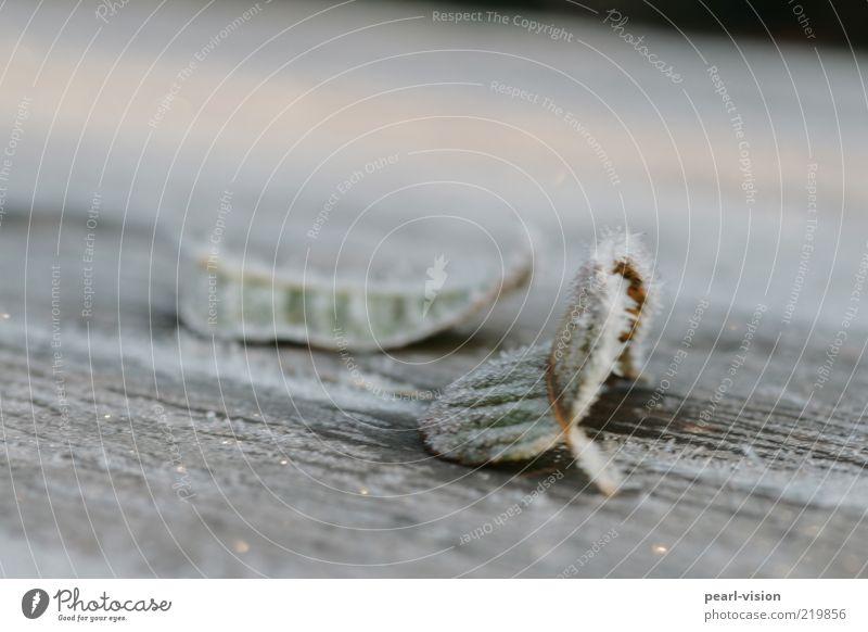 Morgenfrost Natur Blatt Holz Eis Stimmung Frost gefroren Eiskristall Blattadern Niederschlag