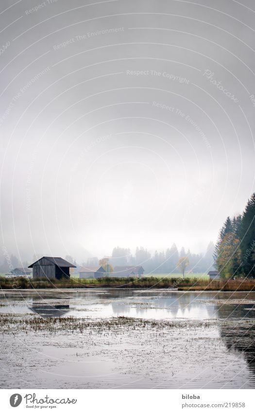 Haus am See Wasser grün Wolken Einsamkeit Herbst Gefühle grau glänzend Nebel Hoffnung Trauer ästhetisch Schweiz Sehnsucht Tanne