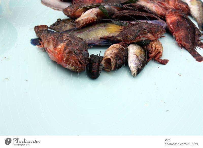 beyond the sea [14] blau rot Tier kalt Wildtier Lebensmittel Ernährung Fisch Kochen & Garen & Backen Tiergesicht Reichtum Bioprodukte Abendessen exotisch