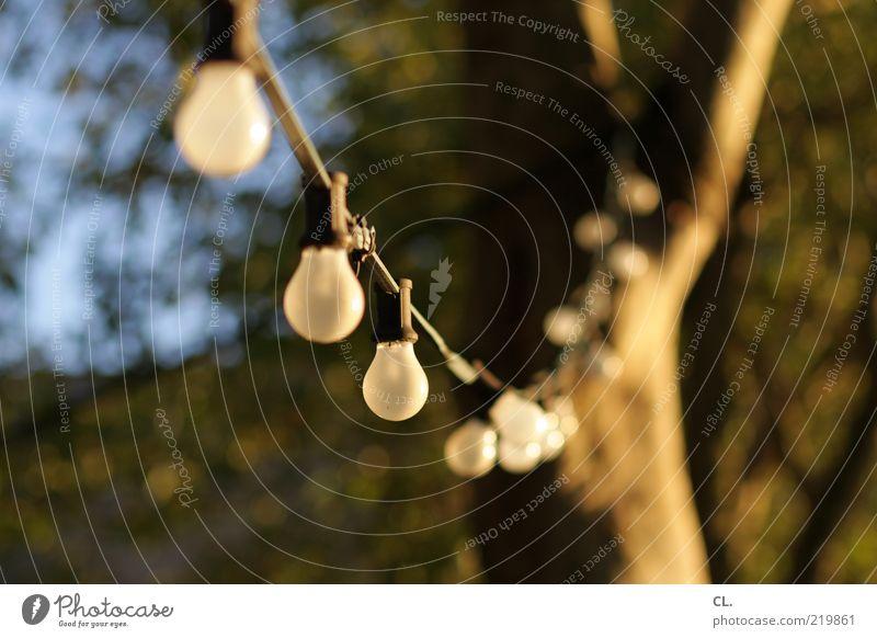 biergarten Natur Sommer Herbst Schönes Wetter Baum Feste & Feiern Freundlichkeit Fröhlichkeit Wärme Freude Vorfreude authentisch Glühbirne Beleuchtung Reihe