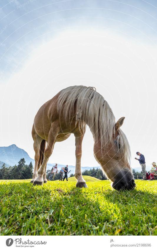 Pferd auf Almwiese Frau Mensch Himmel Natur Jugendliche Mann Pflanze Junge Frau blau grün Junger Mann Sonne Tier Berge u. Gebirge 18-30 Jahre Erwachsene
