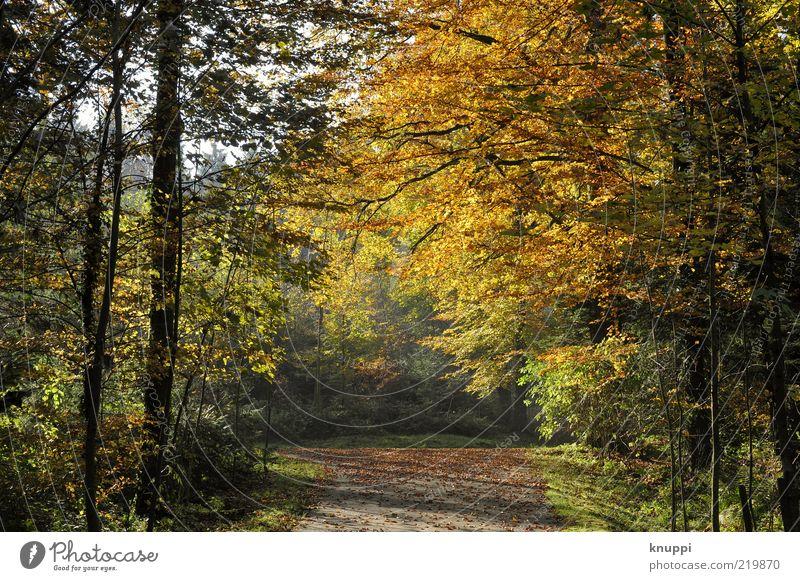 Herbst Natur Baum grün Pflanze Blatt schwarz gelb Wald träumen Wege & Pfade braun Umwelt gold Sträucher Baumstamm