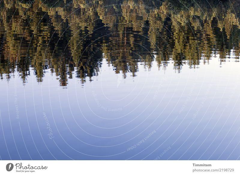 So blind to see. Himmel Natur Pflanze blau grün Wasser Wald schwarz Umwelt Gefühle natürlich See ästhetisch frisch Schönes Wetter einfach