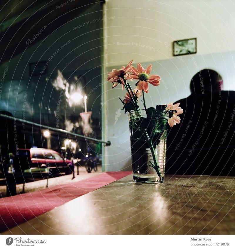 Bio Cocktail Stil Nachtleben Restaurant maskulin Kopf Rücken 1 Mensch sitzen Blume Glas Café Tischplatte Fenster Blick Dekoration & Verzierung Bild Quadrat