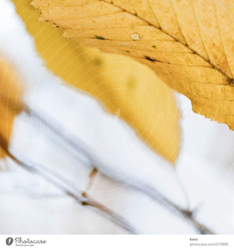 Blättchen II Natur schön Blatt gelb Herbst grau Stimmung braun gold ästhetisch Wachstum Vergänglichkeit außergewöhnlich leuchten Gemälde Herbstlaub