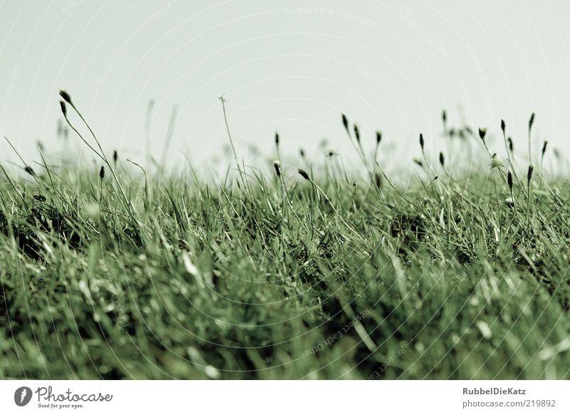 Wiesn Natur Himmel grün blau Pflanze Sommer kalt Wiese Gras Landschaft Umwelt
