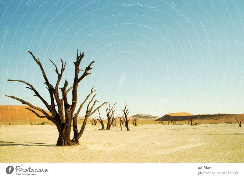 dürre weite Himmel Baum Sand Landschaft Horizont trist Reisefotografie Wüste außergewöhnlich trocken Dürre Pflanze dehydrieren laublos