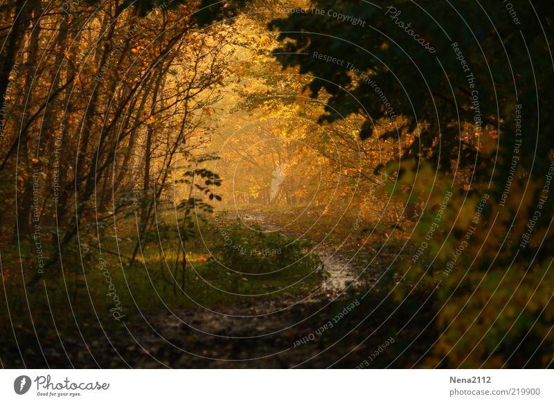 Into the light... Natur Wasser Baum grün Pflanze Blatt gelb Wald Herbst Gras Wege & Pfade Landschaft braun Nebel Wetter Umwelt