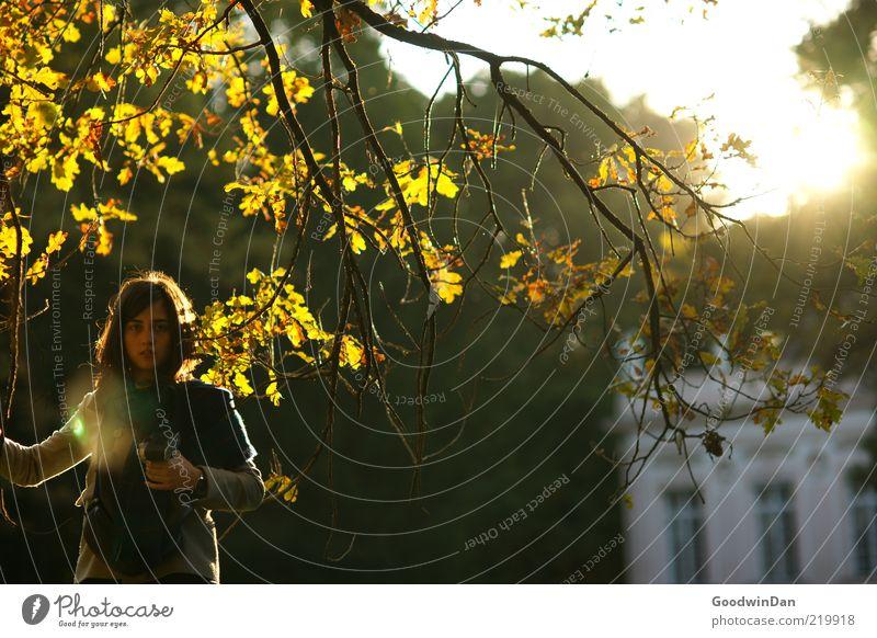 erschöpft II Mensch feminin Junge Frau Jugendliche Erwachsene 1 Umwelt Natur Baum Park Stimmung Ast Herbst frei Müdigkeit Erschöpfung hell spät Farbfoto