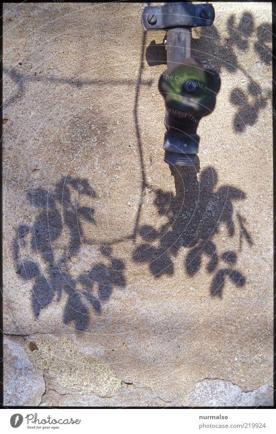 verwirrende Schatten Natur alt Pflanze Blatt Wand Stimmung Umwelt ästhetisch authentisch Vergänglichkeit Blühend trocken Surrealismus Zweig Schatten Wasserhahn