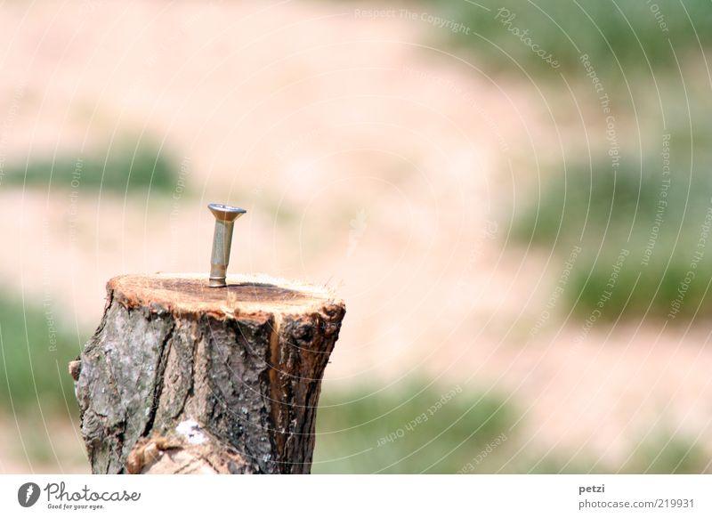 Die einsame Schraube Baumstumpf Holz Metall fest rund braun grün silber Farbfoto Außenaufnahme Textfreiraum rechts Textfreiraum oben Textfreiraum unten Tag