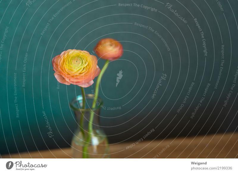 Freundschaft Leben harmonisch Wohlgefühl Zufriedenheit Sinnesorgane Erholung ruhig Meditation Duft Geburtstag Trauerfeier Beerdigung Blühend Freundlichkeit