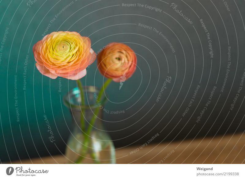 Freundeskreis Blume Erholung ruhig Blüte Gesundheit Feste & Feiern orange Zusammensein Zufriedenheit frisch Geburtstag genießen Fröhlichkeit Geschenk