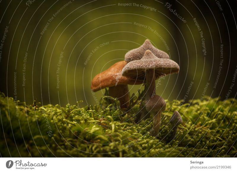 Zipfelmützen Umwelt Natur Landschaft Pflanze Tier Sonne Sommer Herbst Schönes Wetter Gras Moos Park Wiese Wald Wachstum Pilz Pilzhut Pilzsucher Pilzsuppe