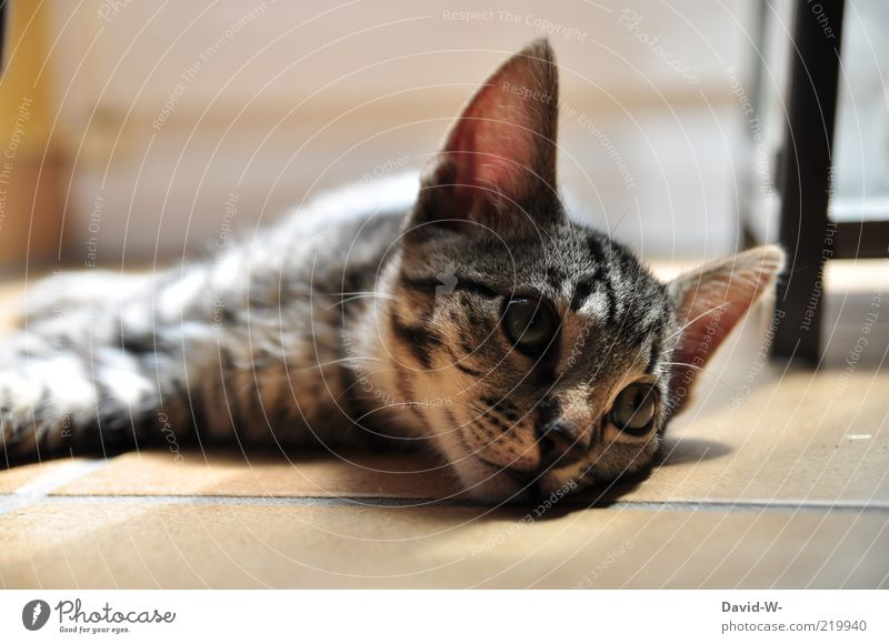Katze schön ruhig sanft Boden ruhe Haustier