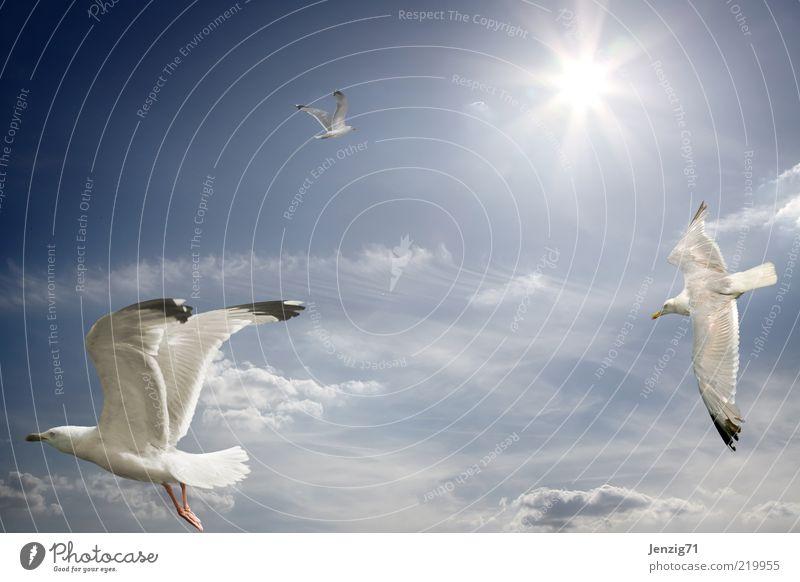 Der Sonne entgegen. Himmel Sonne Wolken Tier Freiheit Wärme Vogel Schönes Wetter Möwe Schweben Leichtigkeit Sonnenstrahlen Gegenlicht Vogelflug