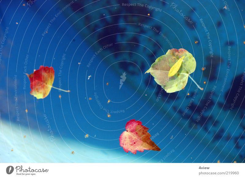 Blätter halt Natur Wasser blau Pflanze rot Blatt gelb Herbst orange Umwelt Schönes Wetter stagnierend Herbstlaub Im Wasser treiben Wasseroberfläche Herbstfärbung