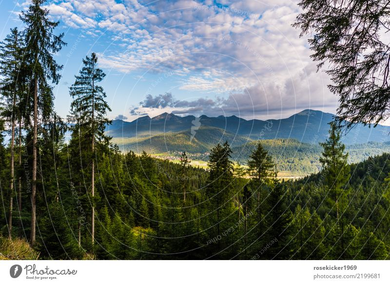 Morgenstimmung Ferien & Urlaub & Reisen Ausflug Freiheit Sommerurlaub Joggen wandern Natur Landschaft Gewitterwolken Schönes Wetter Wald Alpen Erholung Fitness