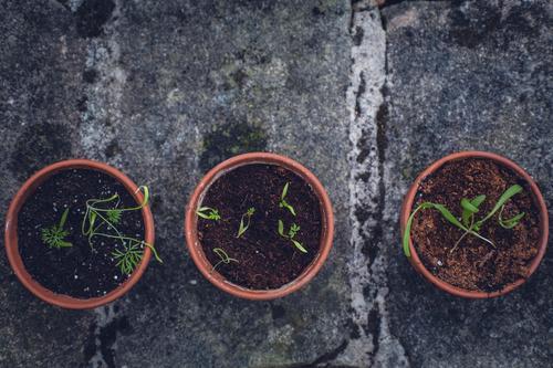 Pflanzenaufzucht zur Selbstversorgung Natur Gesunde Ernährung grün Essen Lifestyle Garten Lebensmittel braun Freizeit & Hobby Wachstum authentisch Fitness