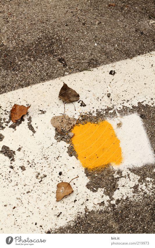 Herbst auf Italienisch weiß Sommer Blatt gelb Straße grau Stein Farbstoff Wege & Pfade Linie Ecke trist Boden Wandel & Veränderung liegen