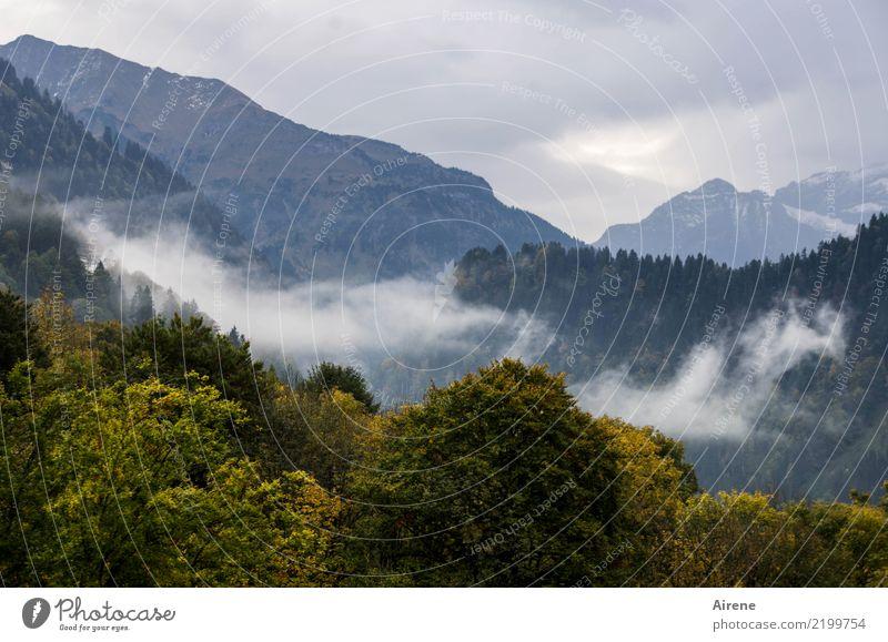 Herbst Wanderzeit I Ausflug Berge u. Gebirge wandern Landschaft Wolken Nebel Wald Alpen Bregenzerwald Gipfel dunkel hoch natürlich oben trist blau grün ruhig