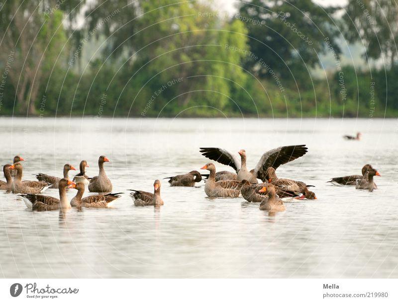 Morgens am See Natur Wasser Tier Park Stimmung Zusammensein Vogel Umwelt mehrere Tiergruppe Flügel Schwimmen & Baden Lebensfreude natürlich Wildtier