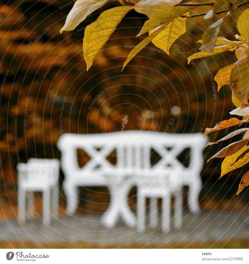 Goldener Herbst Lifestyle Stil Erholung ruhig Garten Natur Schönes Wetter Pflanze Baum Sträucher Holz ästhetisch braun weiß elegant Vergänglichkeit