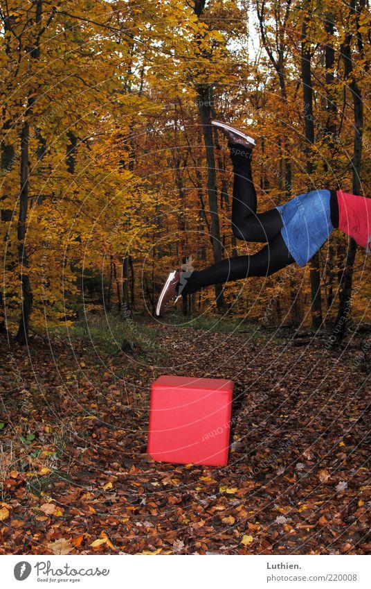 wo ist der Würfel? Mensch Beine Fuß 1 Natur Herbst Wald fallen fliegen außergewöhnlich gelb gold rot schwarz Strumpfhose Wege & Pfade Herbstlaub Herbstwald