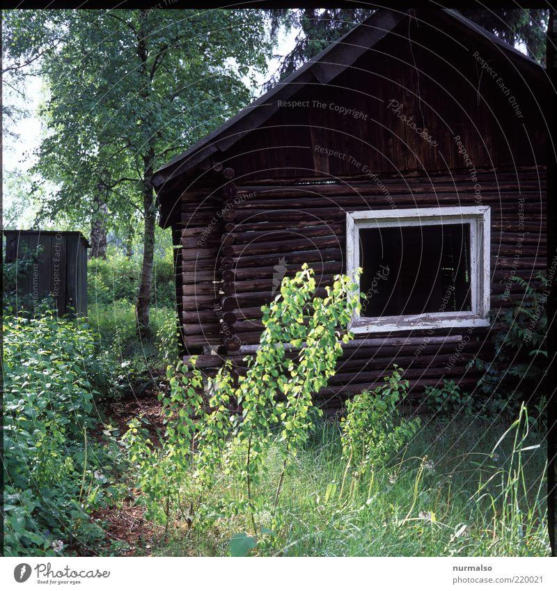 Knusper Knusper . . . Natur alt Baum Haus Einsamkeit Wald dunkel Fenster Gras Garten Angst Sträucher authentisch Häusliches Leben natürlich Idylle