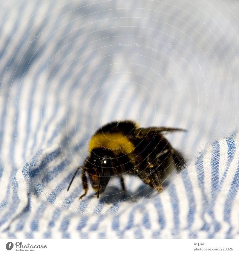 Hummel. Sommer Tier Umwelt weich Flügel Insekt Streifen Fühler Tuch krabbeln gestreift Textilien fleißig Strukturen & Formen samtig