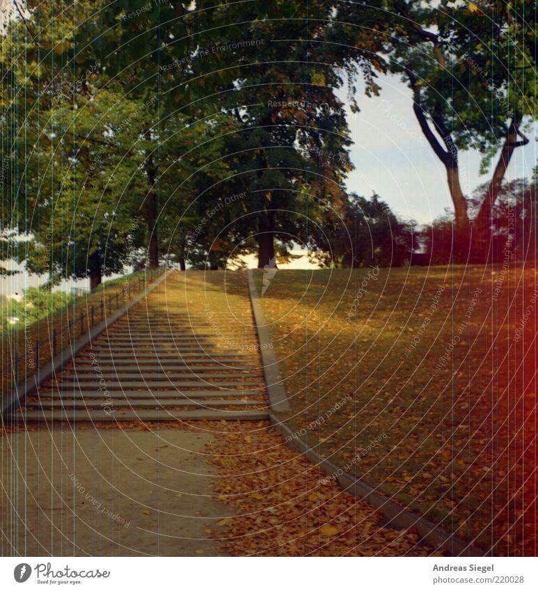 Brühlsche Terrassen-Treppe Natur Landschaft Sonnenlicht Herbst Baum Blatt Park Wiese Dresden Altstadt Menschenleer Linie Streifen authentisch schön Idylle